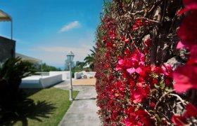 Vacanze presso Residence Palummera Forio di Ischia